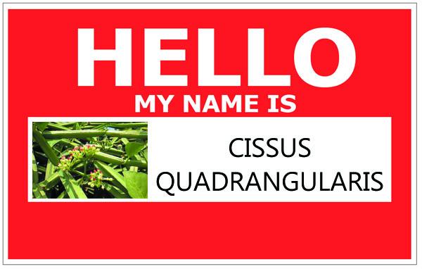 Cissus Names